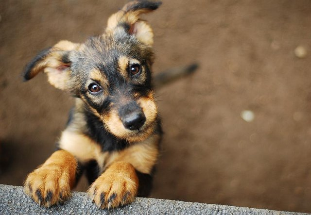 These are the dog breeds most at risk of being targeted by thieves (Photo: Shutterstock)