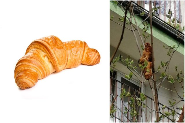 Locals thought the croissant in the tree was a mysterious creature (Photos: Shutterstock / Facebook)