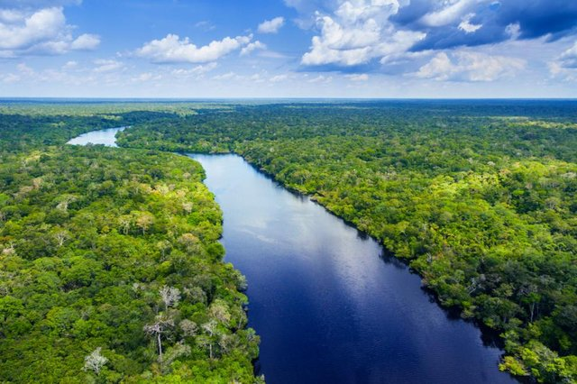 Rainforest such as the Amazon play a crucial role in climate, weather and serve as the habitat to thousands of variants of plant and animals (Picture: Shutterstock)