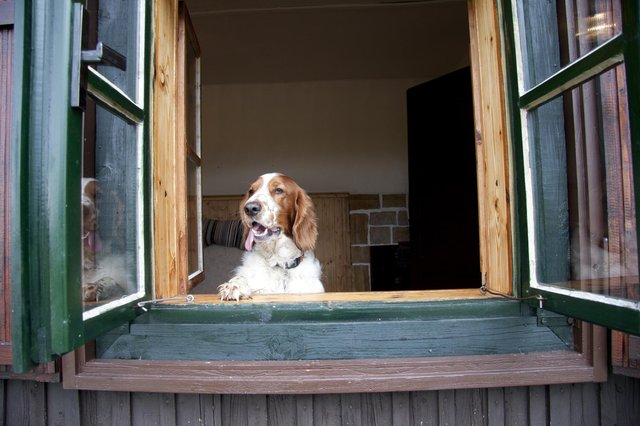 There's no need to leave the dog at home for your holiday break (Shutterstock)