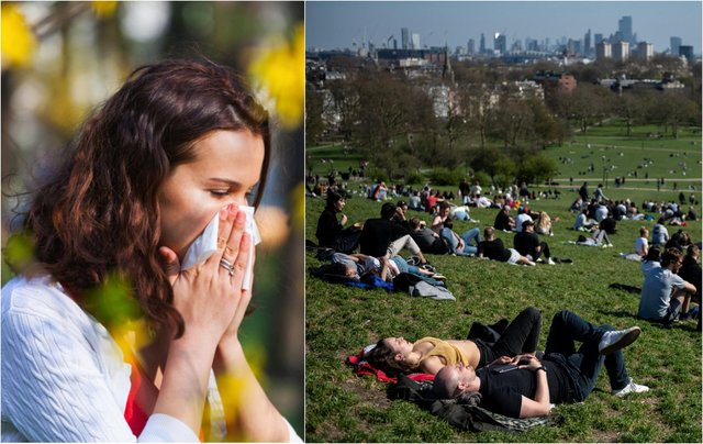 Tree pollen usually occurs between late March and mid-May (Photo: Shutterstock / Getty Images)