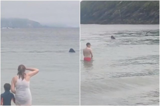 Footage of the basking sharks at the beach in Ireland (Tik Tok / k.m.m.hairstyles)