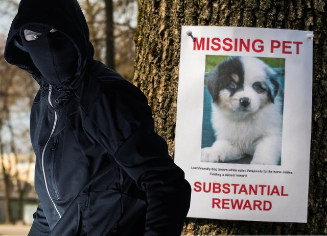 Charities say a rise in demand for dogs - especially 'designer' brands - has driven a surge in thefts.