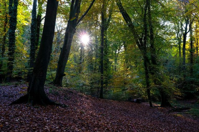 According to the report only seven per cent of the UK's native woodland is in good ecological condition (Photo: Richard Heathcote/Getty Images)