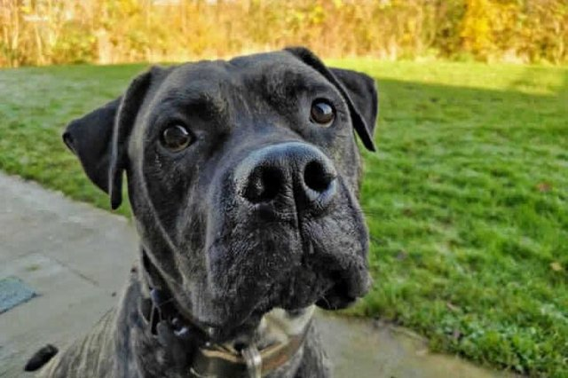 Could you give Bob a loving home? (Photo: RSPCA / SWNS)