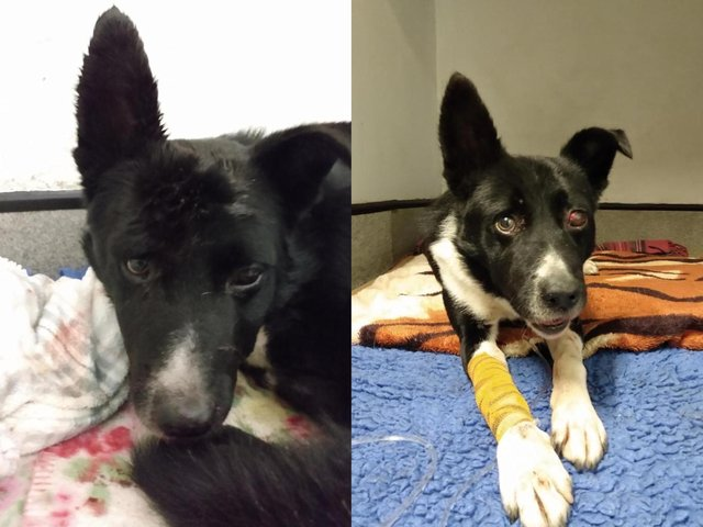 Jake required six weeks of intensive treatment (SWNS)