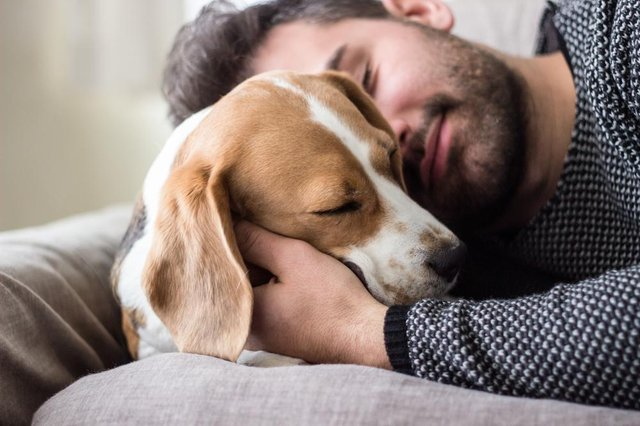 Covid is common in pet cats and dogs whose owners have the virus, new research suggests (Photo: Shutterstock)