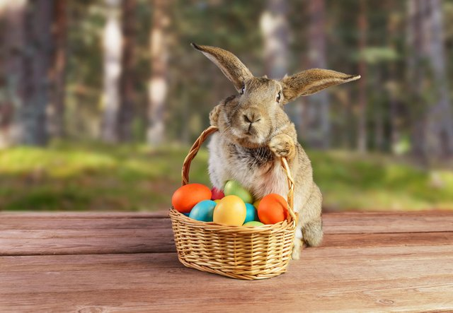 The Easter bunny has long been associated with the holiday of Easter, but where does the famous rabbit come from and what's his role?