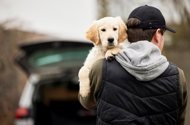 The UK has seen a rise in pet thefts since the beginning of the Covid pandemic (Photo: Shutterstock)