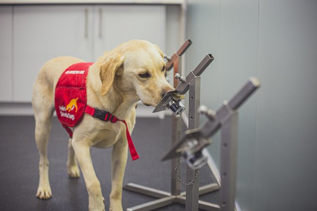 The dogs were able to sniff out Covid-19 with up to 94 per cent accuracy (Photo: PA)