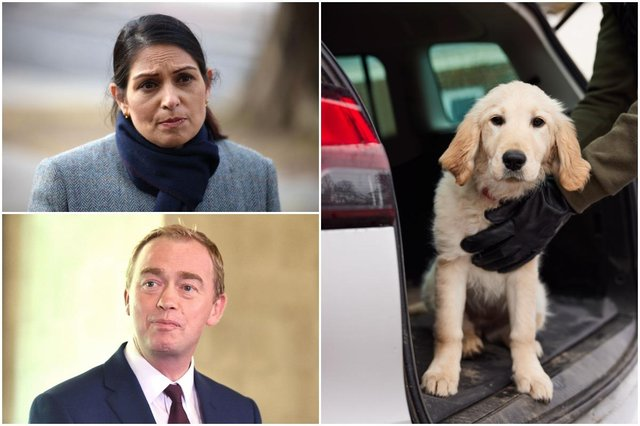 Tim Farron said Home Secretary Priti Patel is failing to take dog thefts seriously