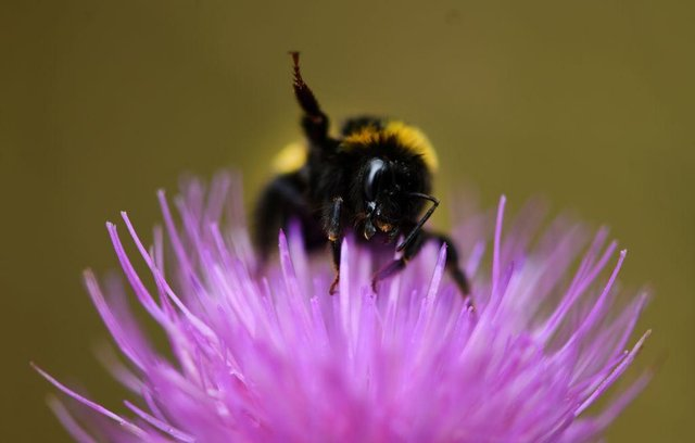 There are lots of ways you can help save the bees (Photo: INA FASSBENDER/AFP via Getty Images)