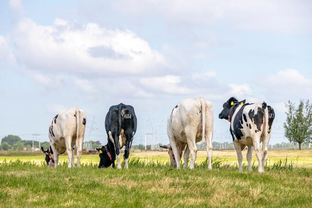Critics say the deal could threaten thousands of UK farmers.