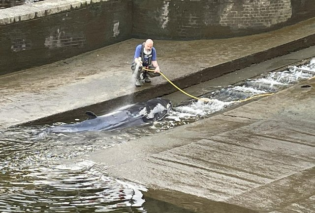 The whale was stuck for a number of hours (Photo: PA Media)