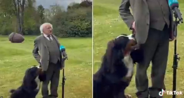 President Higgins and his dog during the interview (Photo: Sinéad Crowley / Twitter)