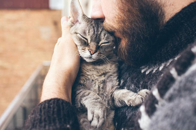 Scientists from the University of Glasgow have identified two cases of human-to-cat transmissions of Covid (Photo: Shutterstock)